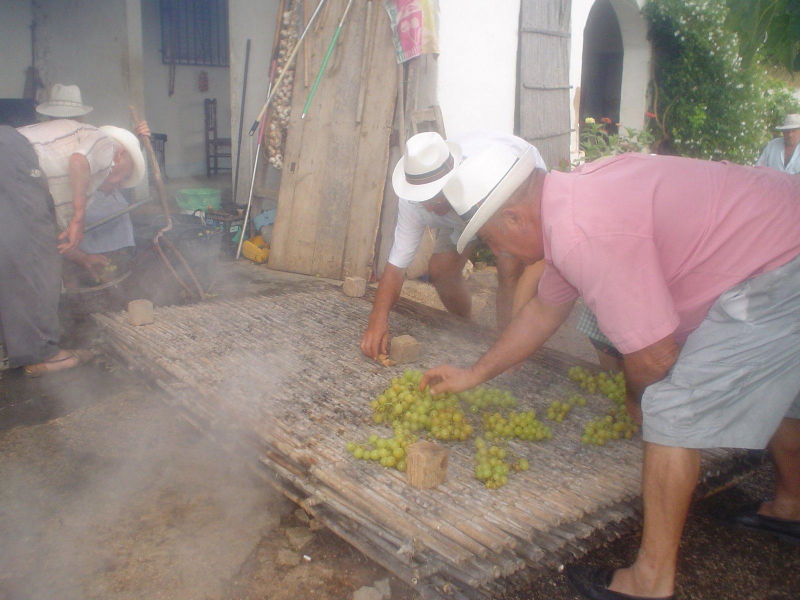 Proceso de escaldá de la uva pasa de Dénia